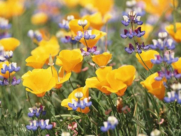 Цветы! Мир цветов! Душа цветов 3