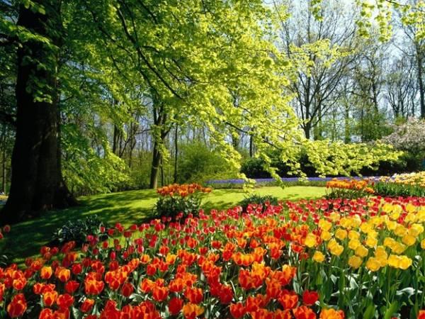Цветы! Мир цветов! Душа цветов 7