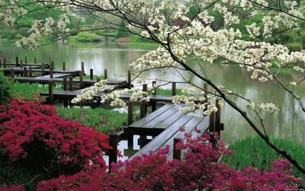 О красоте растений в стихах 163