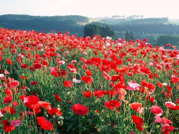 Стихи о цветах о саде
